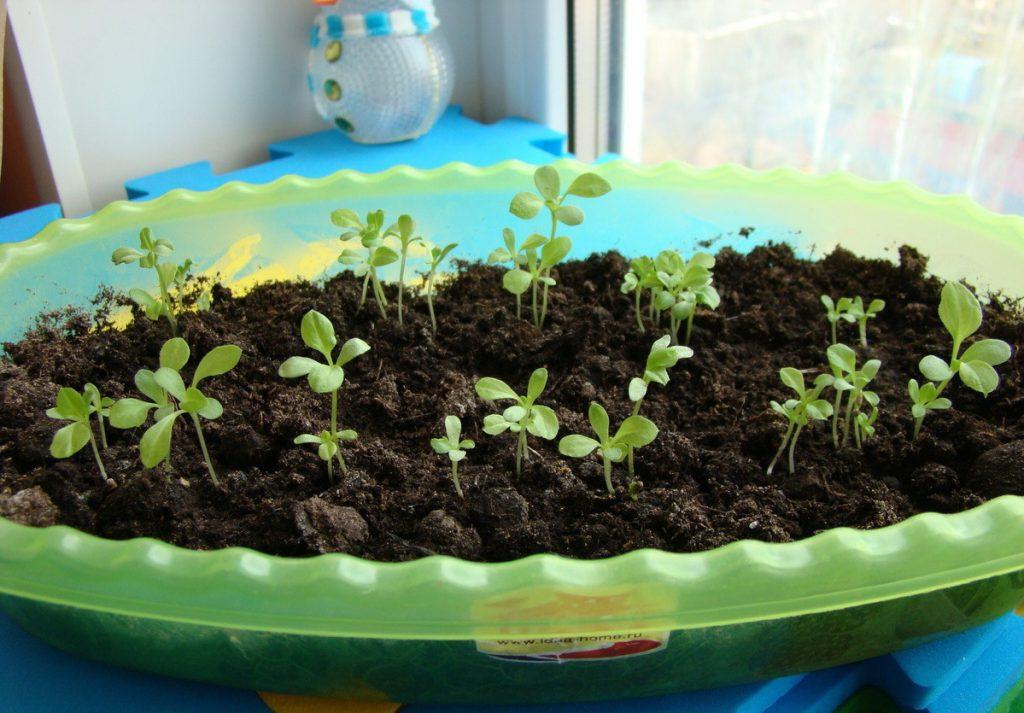 время посева семян в марте 2021