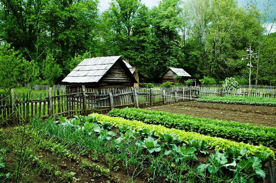 посадка огорода что зачем и когда садить