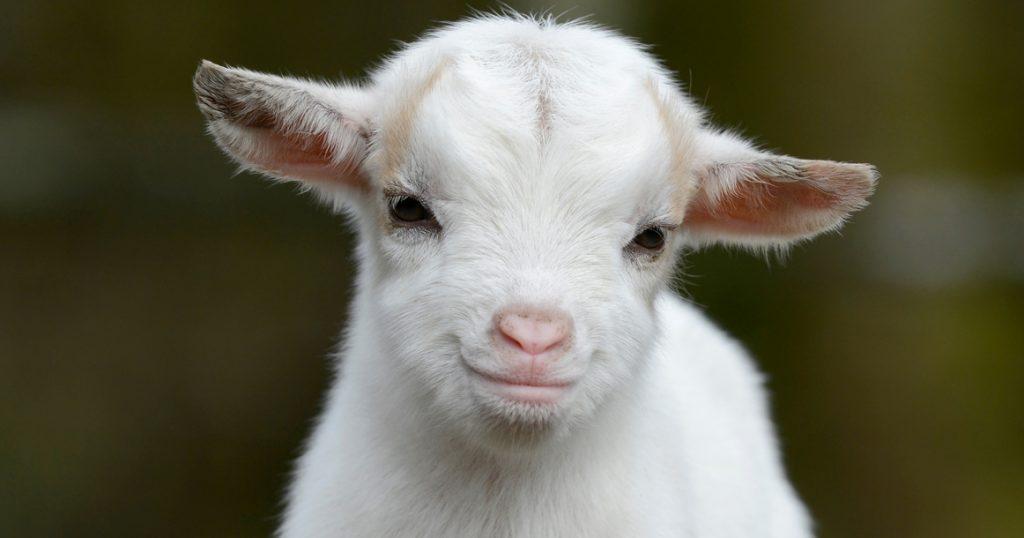 коза в июне прогноз