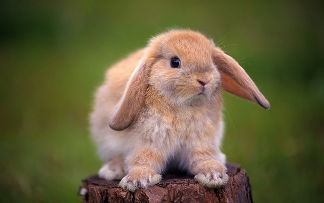 кролик в июне по китайскому гороскопу