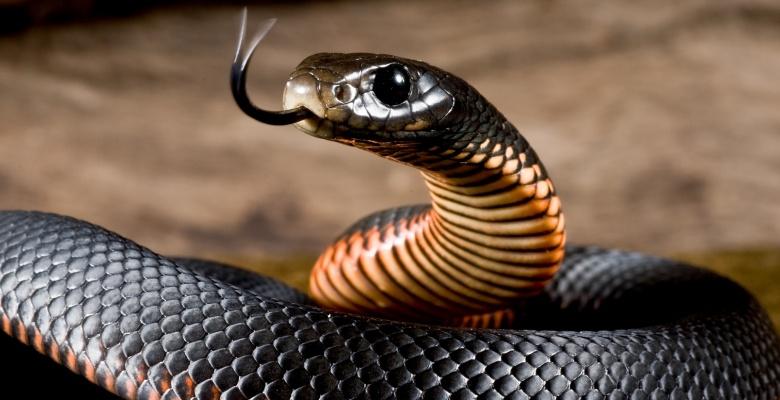 что ждет змею в июне 2021 по восточному гороскопу